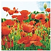 Triple-Ply Poppy Field Napkins